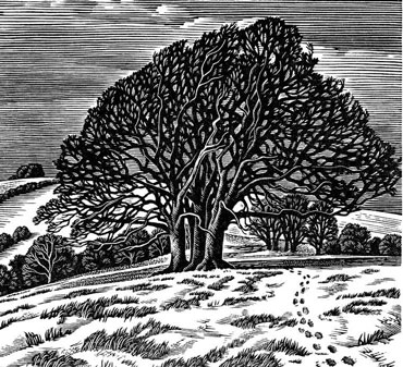 Downs in Winter, Howard Phipps